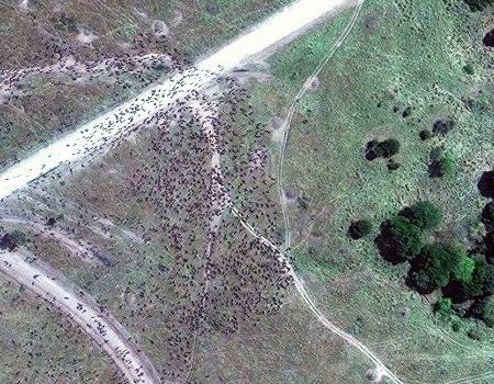 WorldView-3 Satellite Image Wildebeest Migration, Kenya