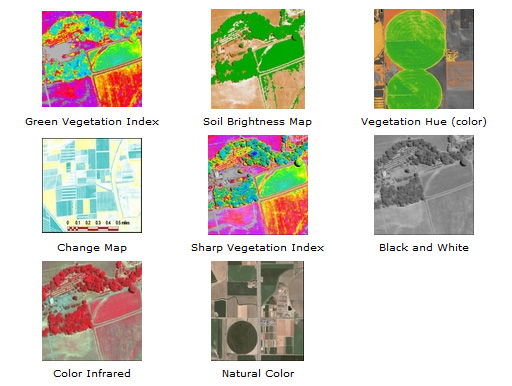 Vegetation Index Maps